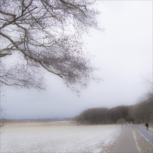 Vinterkvadrater